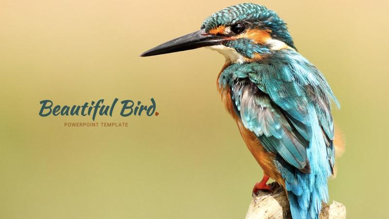 Bird Powerpoint Template