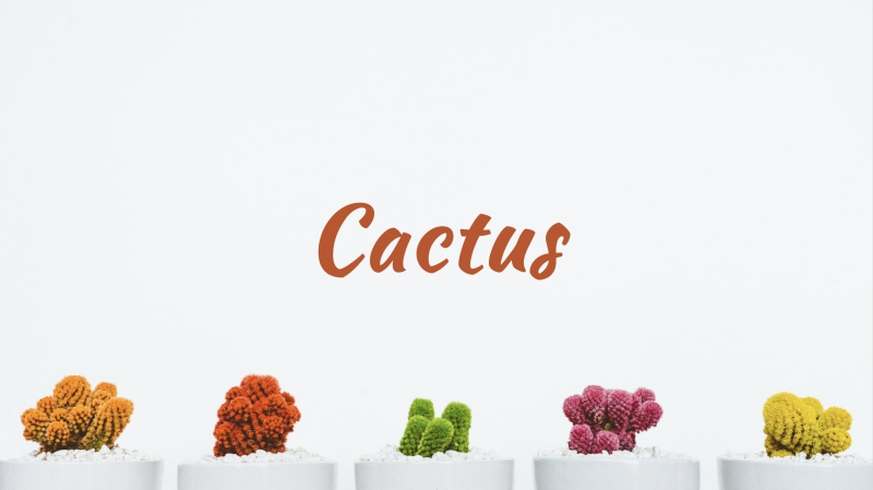 Cactus Powerpoint Template