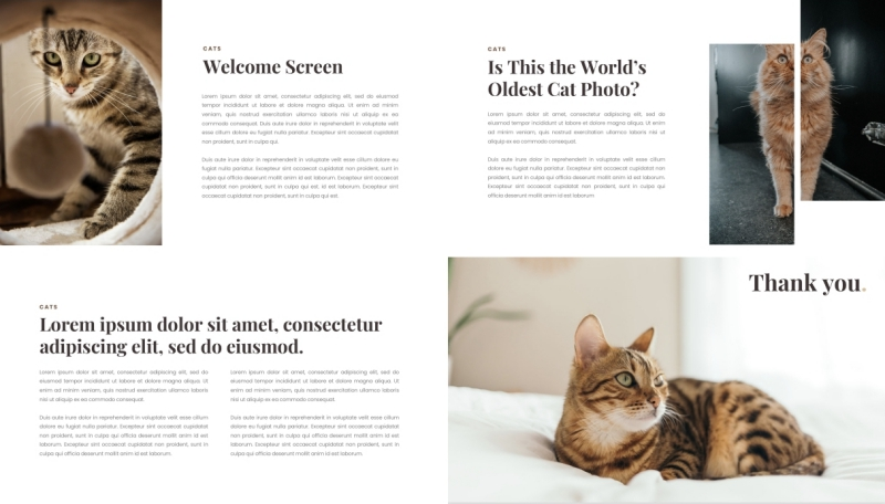Cat PPT Template