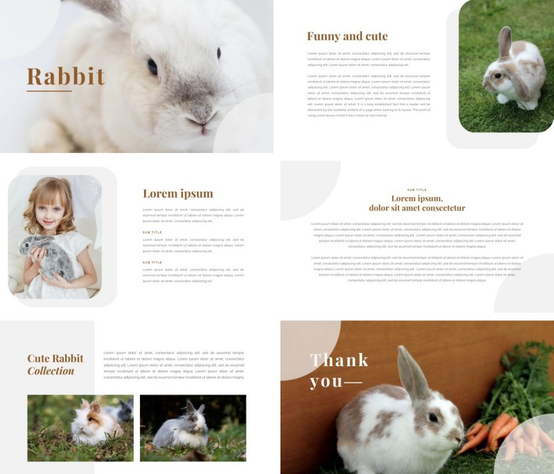 Rabbit PPT Template